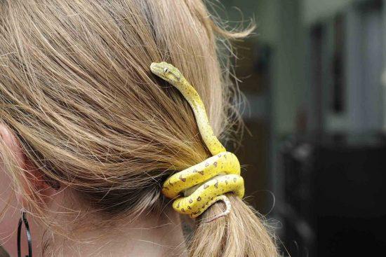 Заколка-змейка